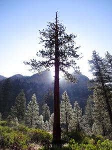 Glistening Dew Along the High Sierra Trail